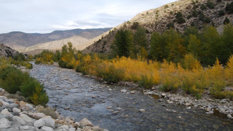 Walker River Fall Color – Sarah McCahill