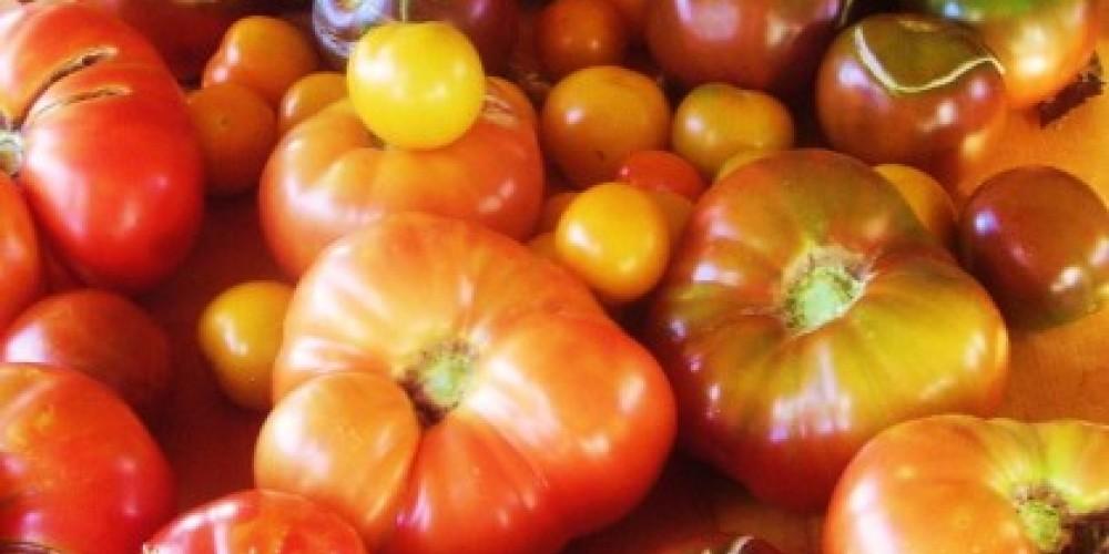 Manzanita Ridge Tomatoes – Sean Kriletich