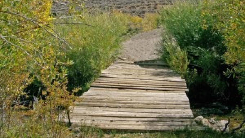Dog Town Bridge – Bill Cook
