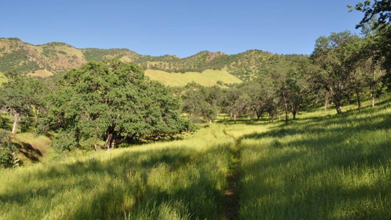Homer Ranch in May. – John Greening