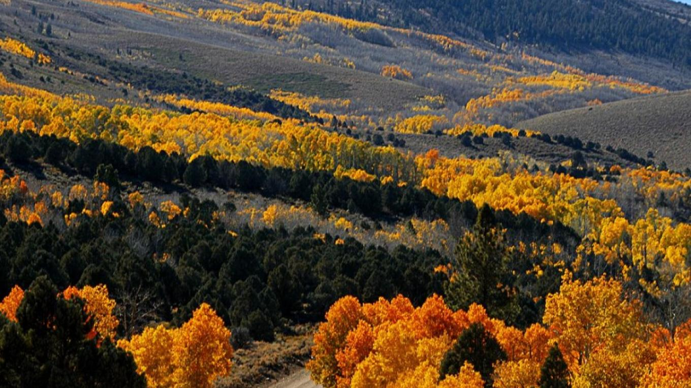 Fall Color, Humboldt-Toiyabe National Forest