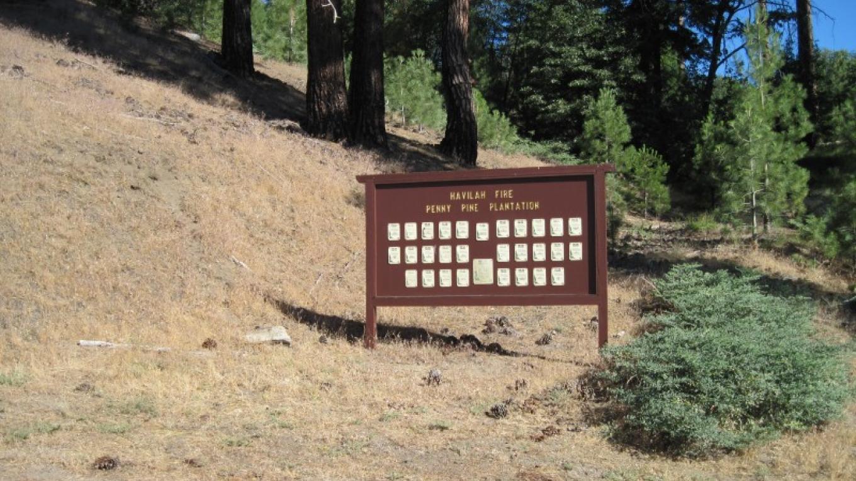 Havilah Penny Pines Plantation – John Springer USDA/ FS