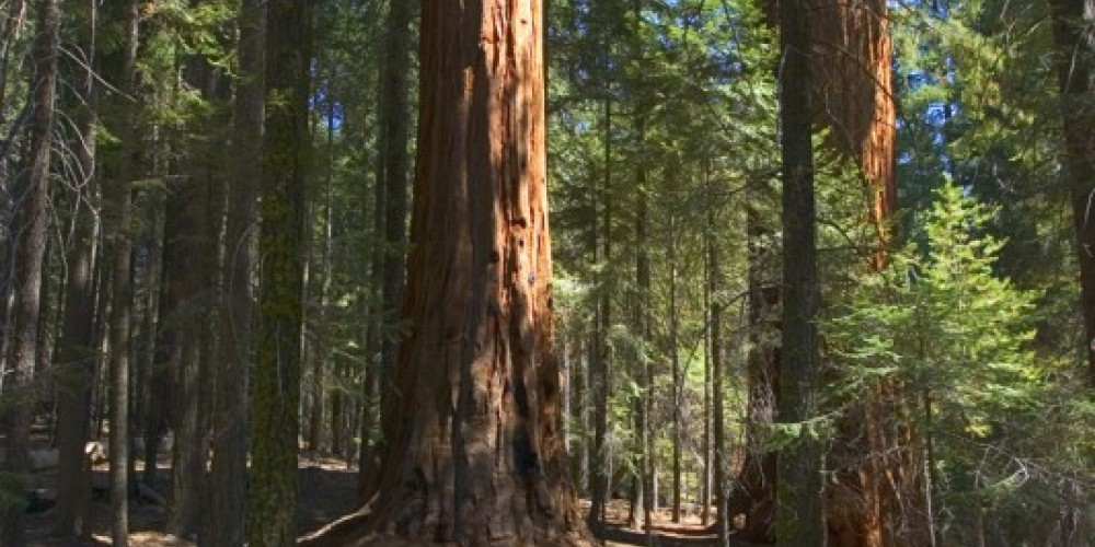 Trail of 100 Giants - Sequoia National Forest – USFS