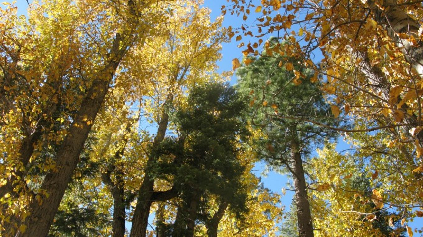 Fall colors near Yuba Pass – Linda Chaplin