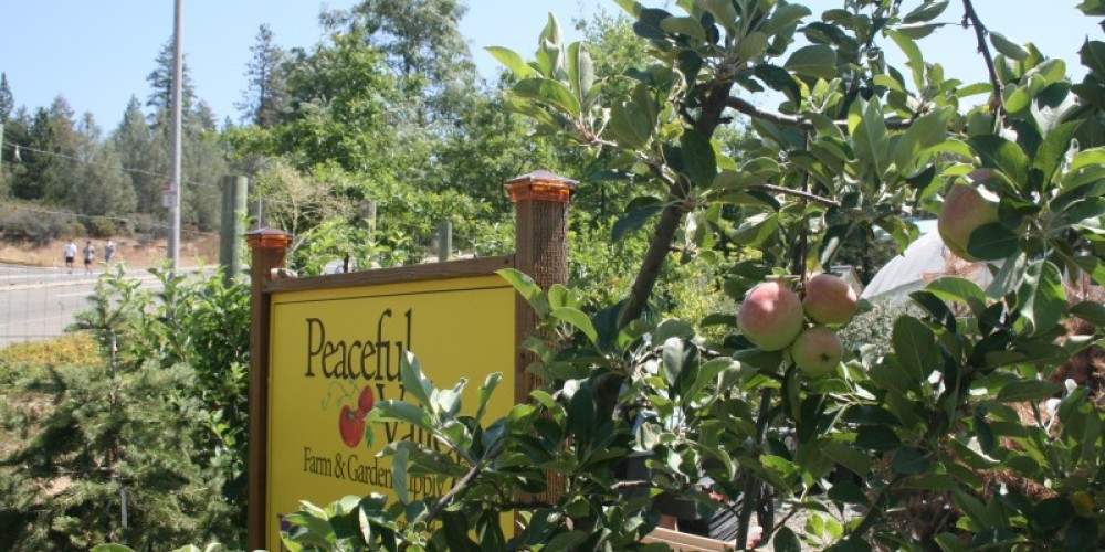 Peaceful Valley's nursery specializes in California native plants, edible ornamentals, certified organic vegetable seedlings, and perennials for the landscape. – Stephanie Brown