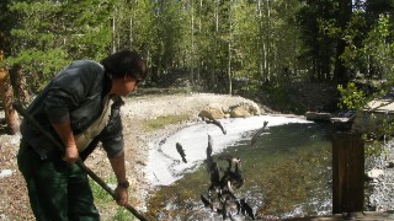 Fish Stocking - Mono County – Martin Strelneck