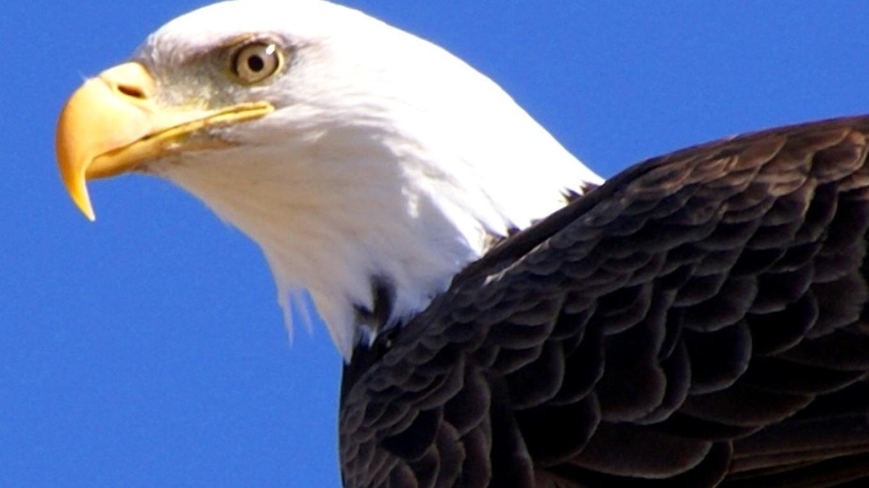 Eagle – Lorissa Soriano