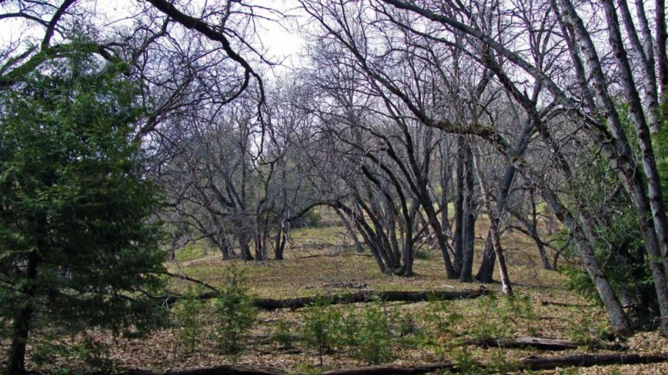 Open foothills forest view from trail. – NPS