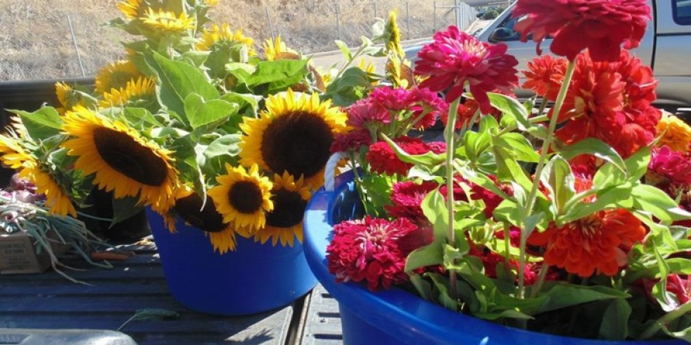 Fresh flowers from Amador County make everyone smile at the Jackson Farmers' market. – Amador County Farmers Market Association