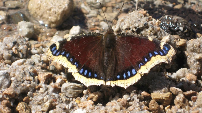 Butterfly – ESLT Staff