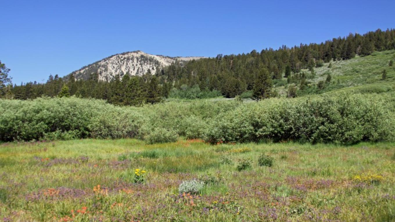 Mt. Rose wildflowers/wilderness – Washoe County Regional Parks & Open Space