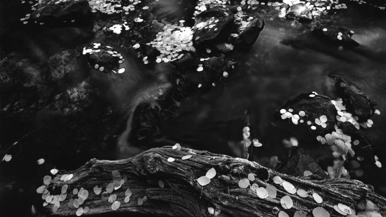 Autumn, Walker Creek – Ben Dewell
