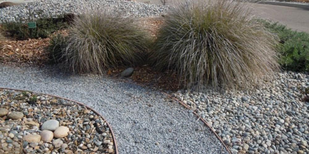 Deer Grass growing in garden – Elsah Cort
