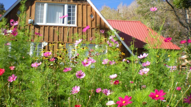Cabins #5 through #9 – Gloria Ma