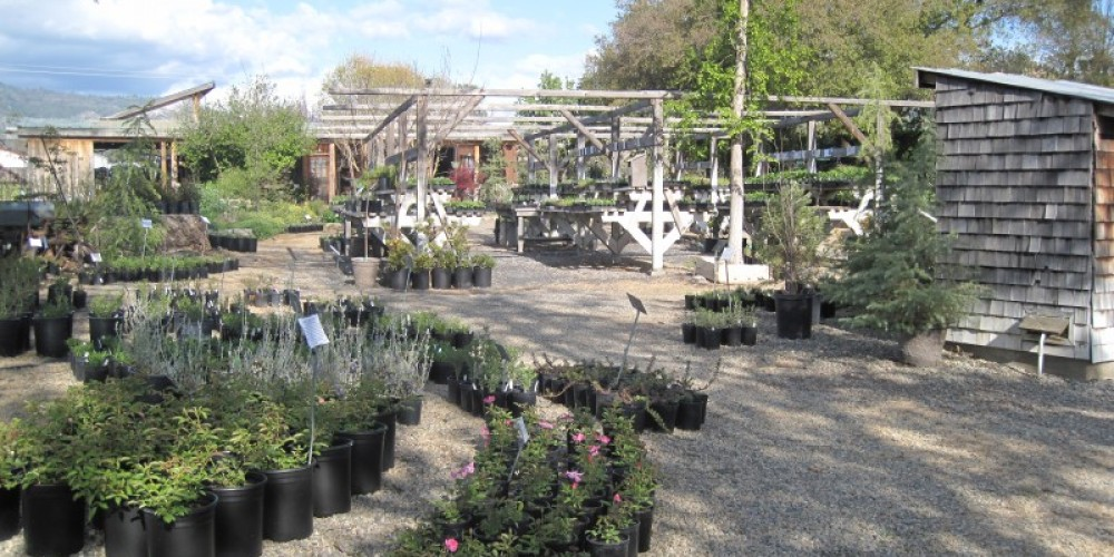 Nursery Grounds 2 – Bonnie Bladen