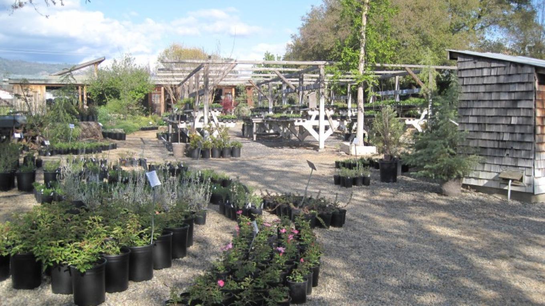 Nursery Grounds 2 – Bonnie Bladen
