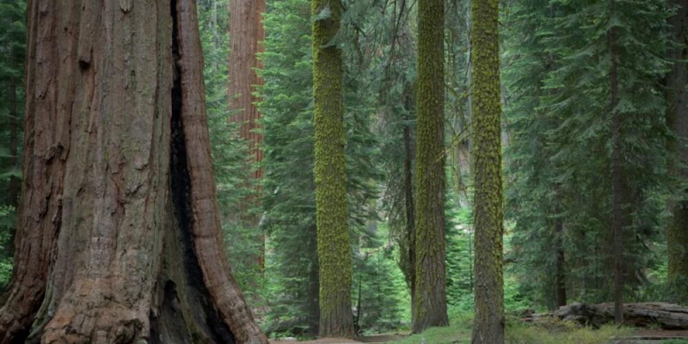 McKinley Grove – Gail Overstreet