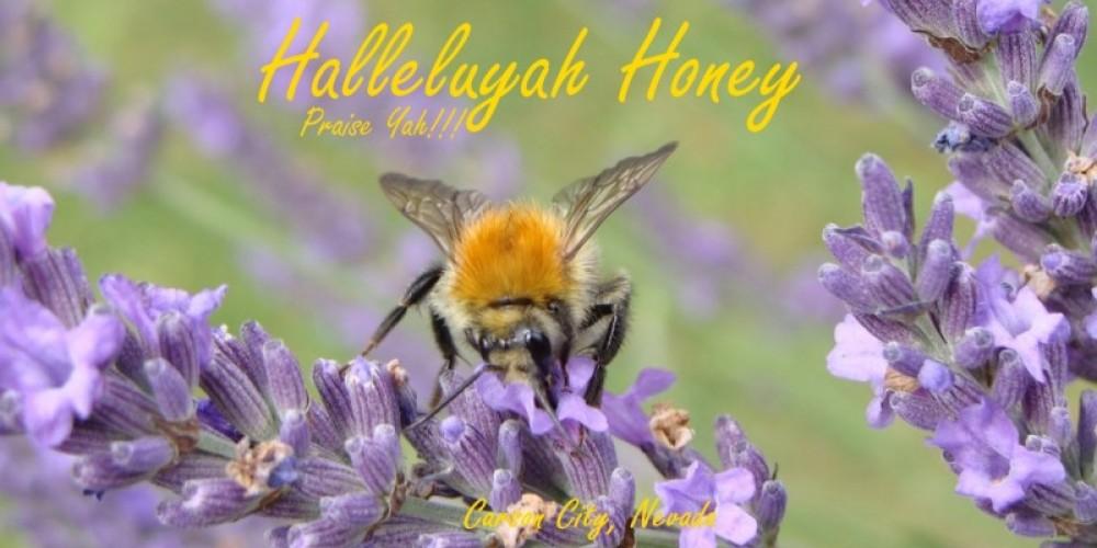 Honey Bee foraging on Lavendar
