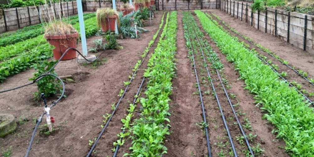 Sierra Valley Farms is a Certified Organic Farm growing vegetables and hosting agritourism events on the farm. – - Photo by Sierra Valley Farms