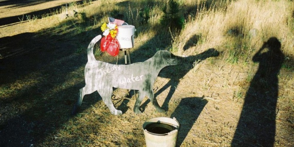 Doggies get water and treats too. – Running with the Bears