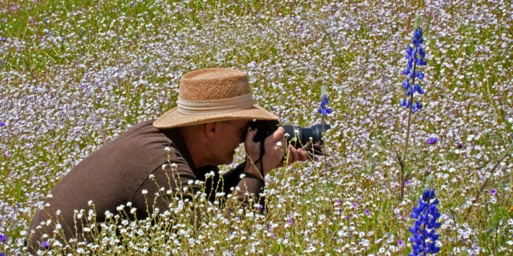 Homer is a great destination for wildflower photography in the spring – John Greening