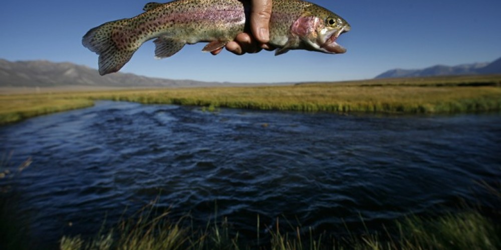 Fish & the Owens River – Rick E. Martin