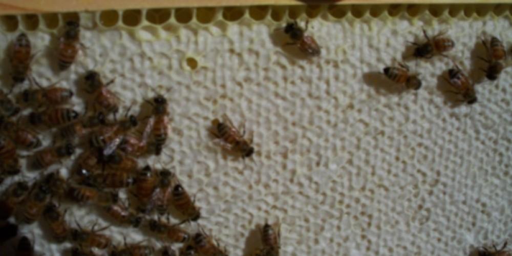 Fresh frame of Honey – James Ellis