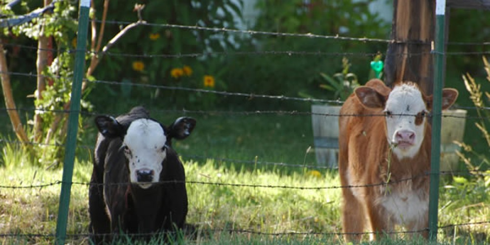 Evidence of cattle ranching can be seen everywhere around Loyalton – Mary Davey