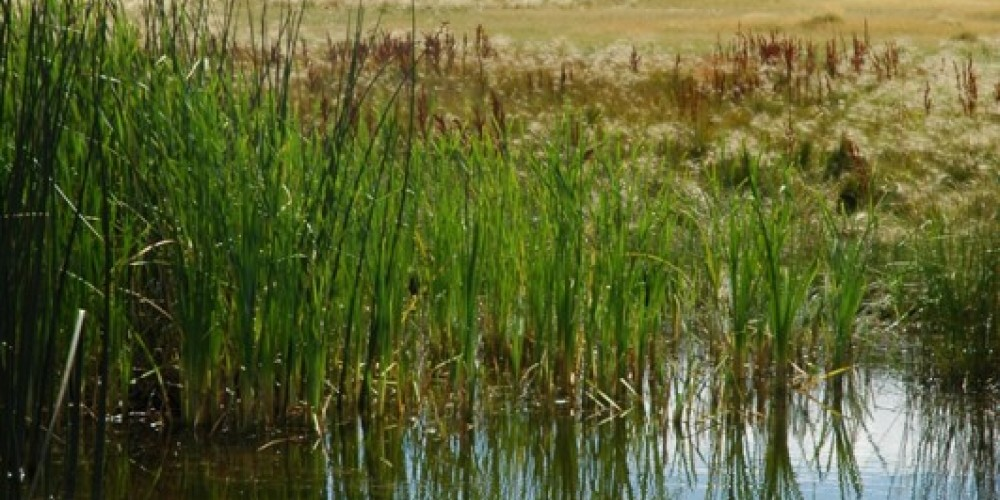 The Valley is a wetland paradise – Mary Davey
