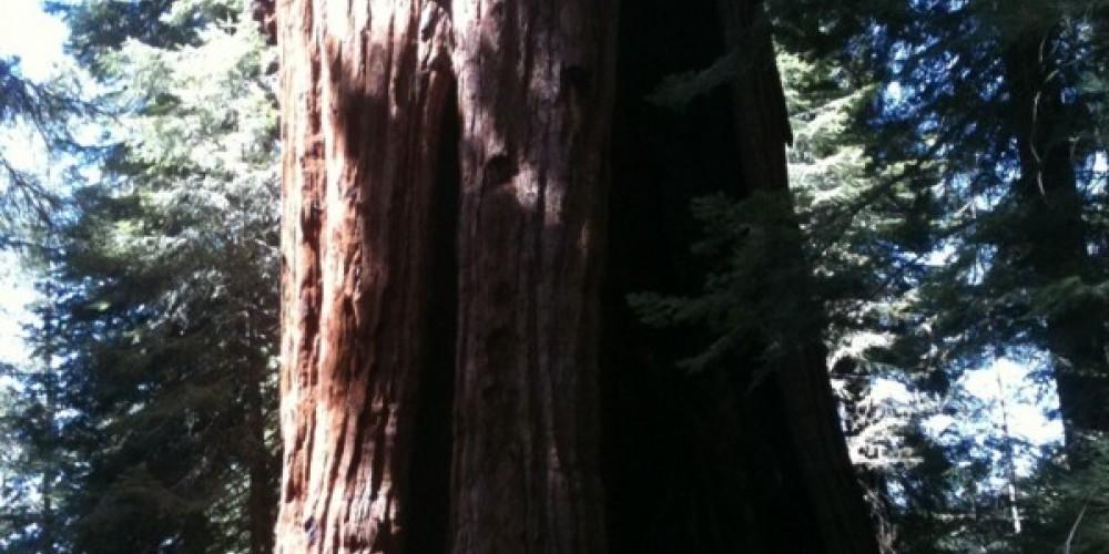 Stagg Tree 3 – Kim Batty