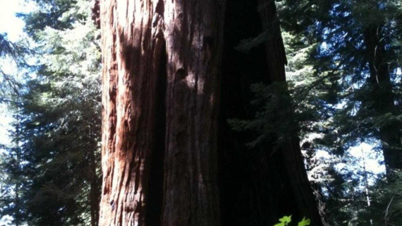 Stagg Tree 3 – Kim Batty