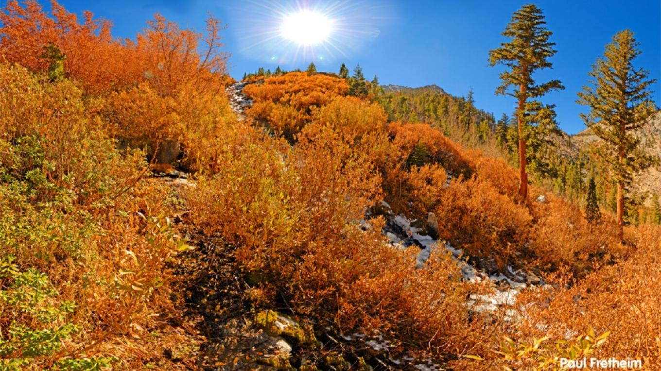 Fall colors blanket Onion Valley, which is just below the John Muir Wilderness Area. – Paul Fretheim