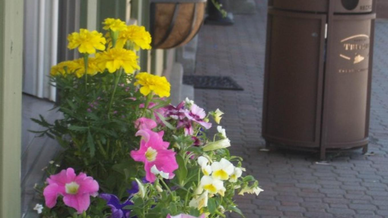 Colorful summer flowers adorn the Truckee California Welcome Center – Truckee Donner Chamber of Commerce