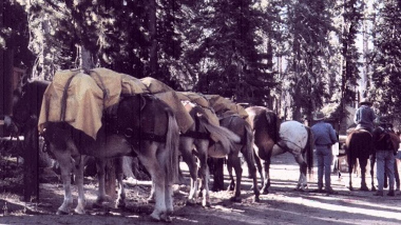 Pack mules ready to go. – Reds Meadow Pack Station