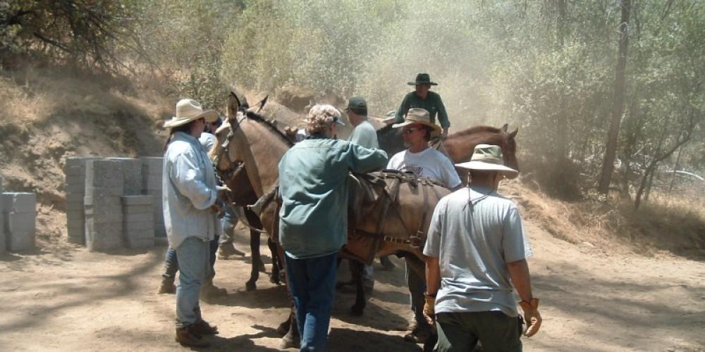 Backcountry Horsemen loading up 75 pound blocks for mules to deliver to Big Sandy Bridge site - Reach 2 – Steve Haze