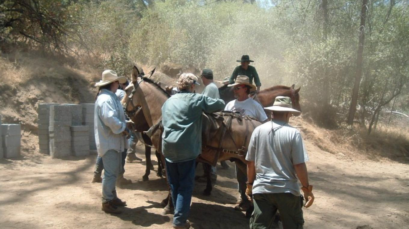 Backcountry Horsemen loading up 75 pound blocks for mules to deliver to Big Sandy Bridge site - Reach 2 – Steve Haze
