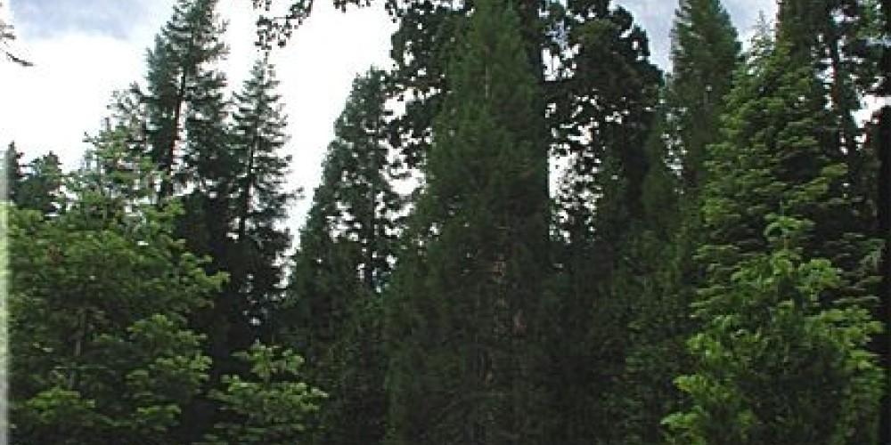 Photo of the Old Granddad Tree – Brenda Negley