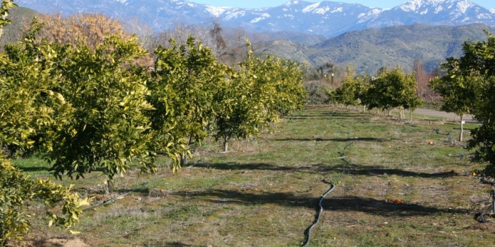 Citrus Orchard, Bravo Lake Botanical Garden – M. Jimenez