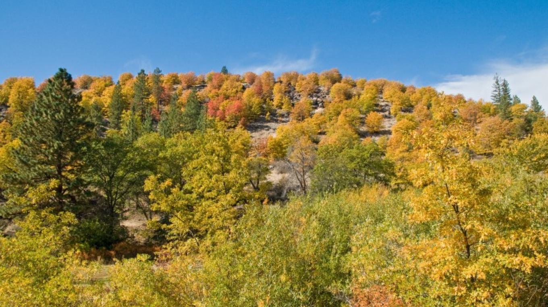 Susanville Ranch Park Fall Color – Joel Rathje