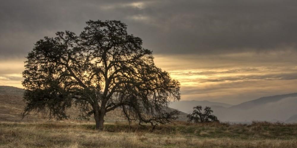 Sunset at the preserve – John Greening