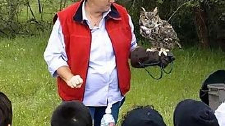 Owl Presentation – Rosanna Ruiz