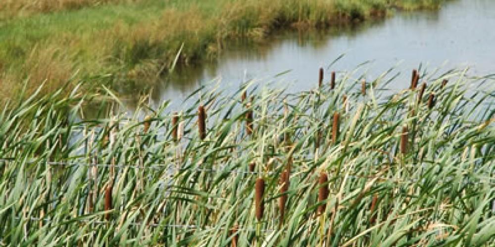 Wetlands surround Loyalton, with birdwatching nearby – Mary Davey