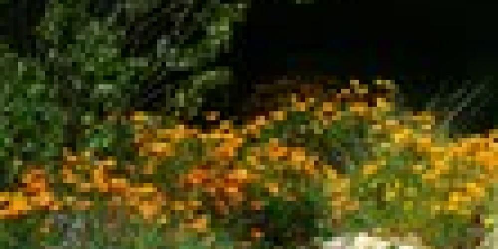 Three Rivers native plant garden – Redbud Garden Club