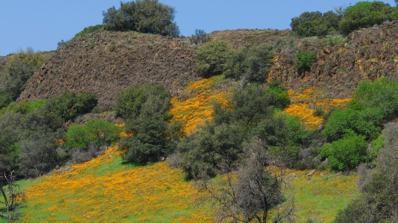 Spring time wildflower views enroute to Wards Ferry Bridge over the Tuolumne River – Terri Metz