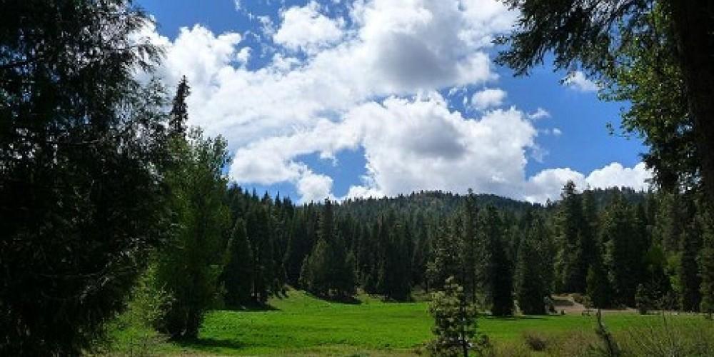 Big Creek/Big Creek Meadow - View from the guest rooms – Pamela Salisbury