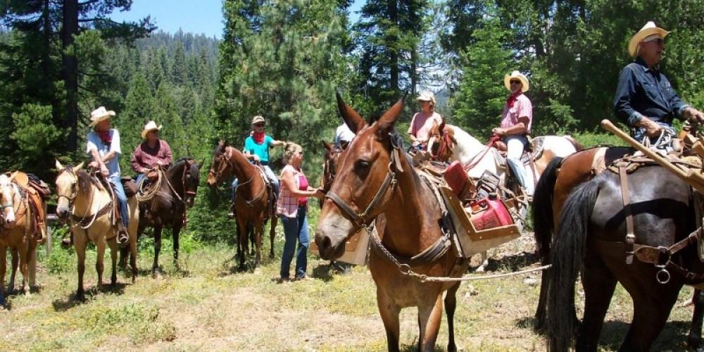Horse Work Crew
