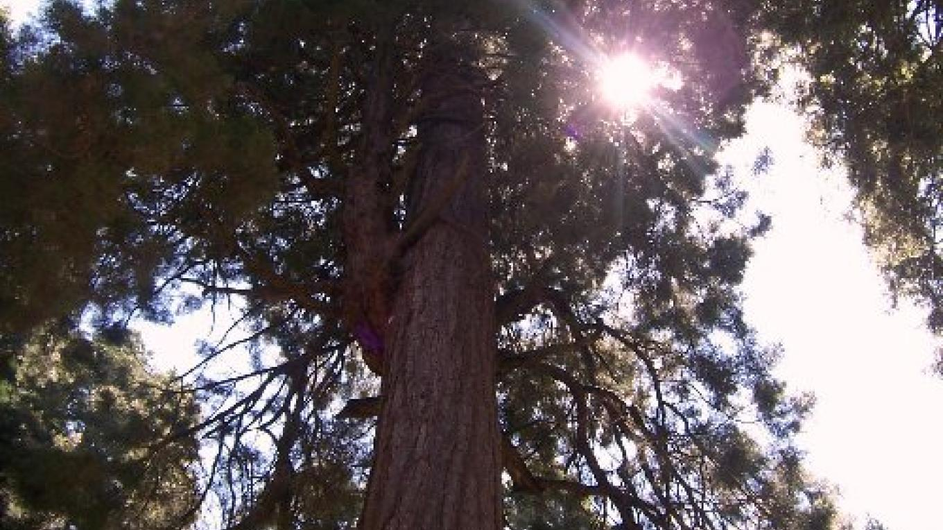 Trail of 100 Giants - Sequoia National Forest – Gré Mars