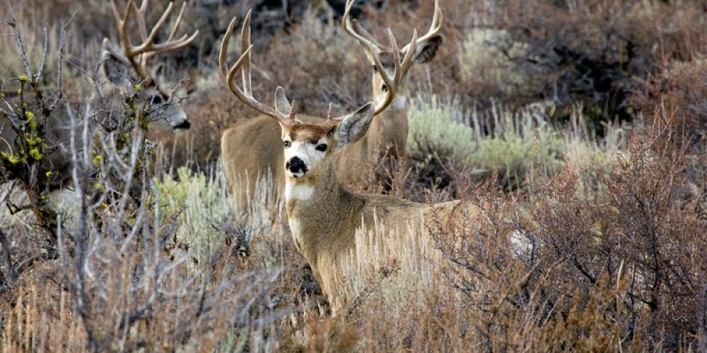 There are plenty of mammals to be seen in the Sierra Valley – Darby Hayes