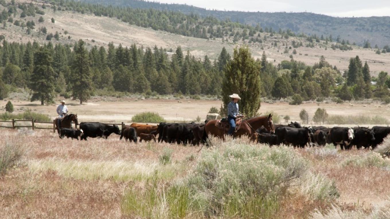 5 Dot Ranch Cowboys – joel rathje