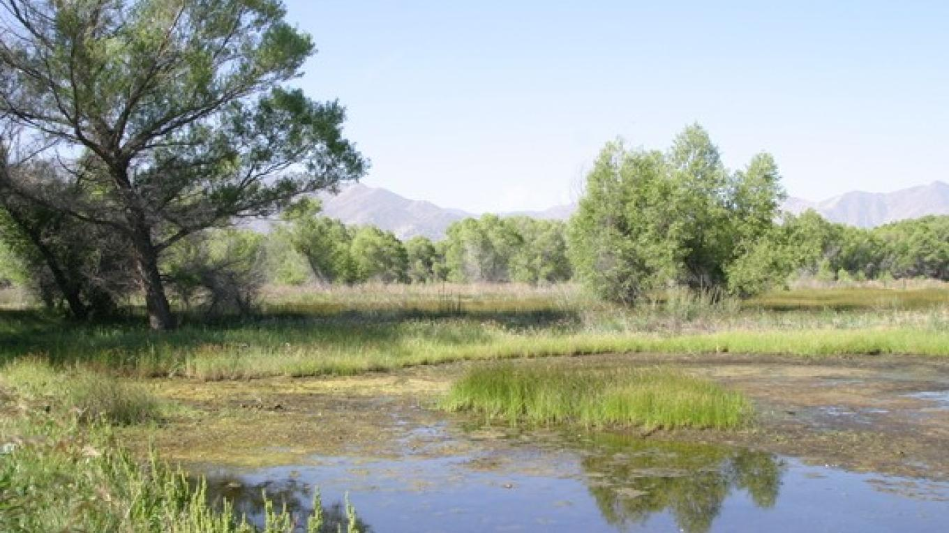 This is one of the small lakes and marshes that can be found in spring and early summer. – Alison Sheehey